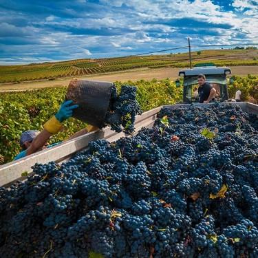"""Rioja y Ribera de Duero aseguran que el vino de 2019 será """"memorable"""" y califican la vendimia de """"histórica"""""""