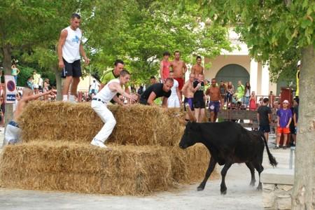 Toro de la Vega no, Sanfermines sí: la incoherencia de los partidos frente al maltrato animal