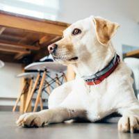 Mascotas Bienvenidas, la app para conocer los bares y restaurantes que te permiten entrar con tu perro