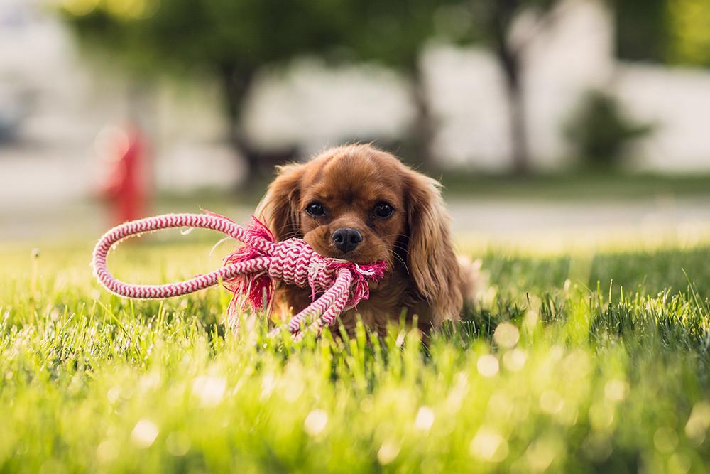 Como Fotografiar Mascotas I Perros 9