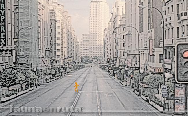 Avenida desierta y sin coches