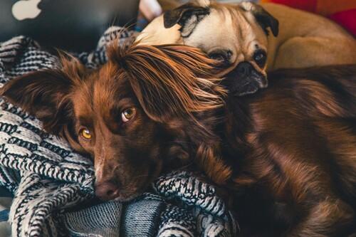 Los mejores collares antiparásitos para mascotas según los comentaristas de Amazon