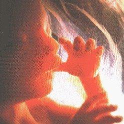 Música para el niño por nacer