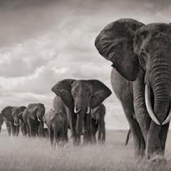 Foto 12 de 12 de la galería la-belleza-animal-en-blanco-y-negro en Xataka Foto