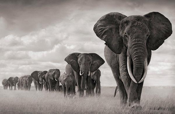 Foto de La belleza animal en Blanco y Negro (12/12)