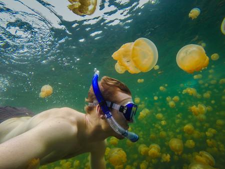 ¿Te bañarías en el lago de las Medusas?