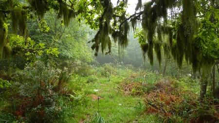 Bosque Muniellos Asturias