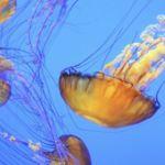 Las mejores imágenes científicas del premio de la Real Sociedad Fotográfica de Reino Unido
