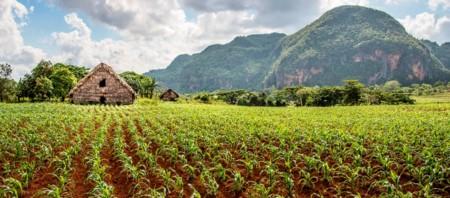 Pinar del Río, el interior verde de Cuba