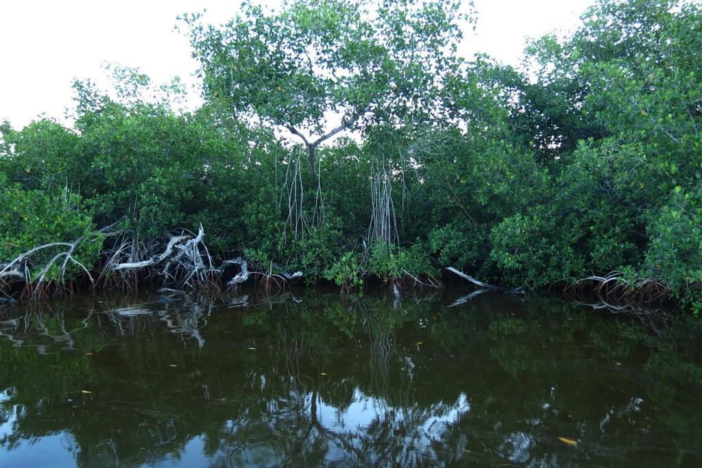 Apple revela una inversión para proteger los bosques de manglares de Colombia(país)