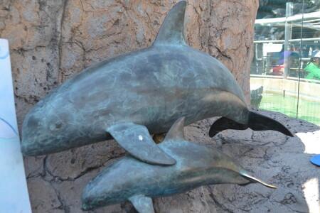 Mexico Abandona A La Vaquita Marina En Peligro De Extincion Y Abre La Pesca En La Zona Protegida En Mar De Cortes