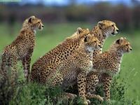 Los 10 mejores destinos para ver vida salvaje en Africa (II)