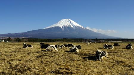 Japón va a dedicar un festivo nacional a las montañas. Y no es el día más raro que tienen
