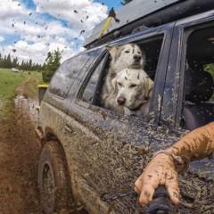 Foto 9 de 9 de la galería loki-the-wolfdog en Diario del Viajero