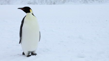 La versión 4.3 del Kernel Linux se hace oficial con nuevas características y mejoras