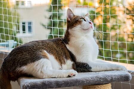 Redes de seguridad en el balcón para cuidar a tu mascota de accidentes (y escapadas voluntarias)