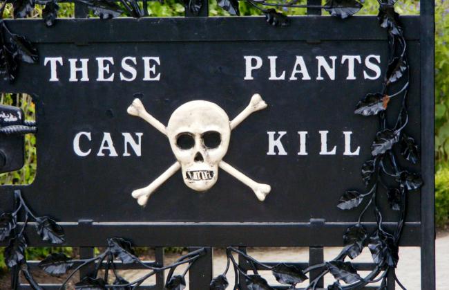 Jardín de Alnwick