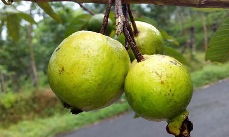 Que Fruta De Temporada Hay En Octubre Y Como Aprovecharla Guayaba