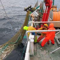 La pesca en el Atlántico podría reducirse hasta en un 60% debido al cambio climático