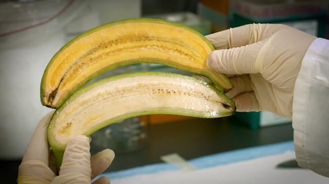 Plátano dorado