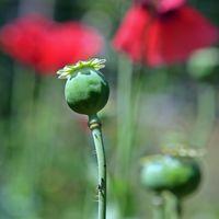 Hasta la FED está ya preocupada por la alarmante epidemia de opiáceos en EEUU