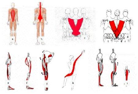 Entrenamiento por cadenas musculares