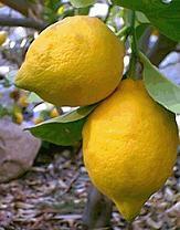 El sabor ácido amarga a los productores de cítricos