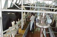 La leche y sus derivados pueden aumentar su precio en poco tiempo
