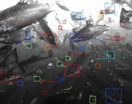 """Tidal: el nuevo proyecto de Alphabet X es un """"reconocimiento facial submarino"""" para analizar peces y océanos"""