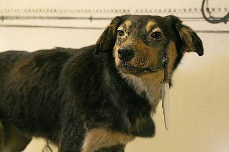 One Of Pavlov S Dogs