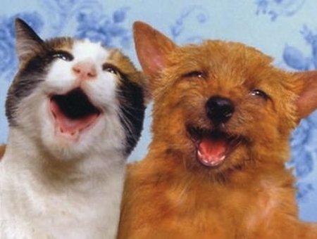 Animales embriagados: los animales también usan las drogas