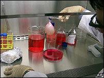 Vejiga regenerada en laboratorio