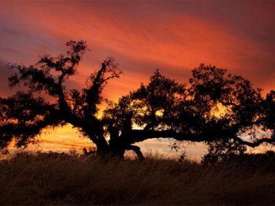 Siete consejos para mejorar tus fotografías de paisaje