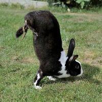 Estos conejos mutantes llevan generaciones caminando sobre dos patas: los científicos finalmente han averiguado por qué