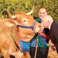 Miss Vaca, el mejor concurso televisivo (¡y gallego!) que aún no conoces y que está arrasando