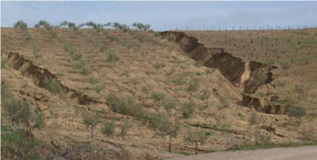 El 20 Del Paisaje Espanol Ya Se Ha Desertificado Image 380