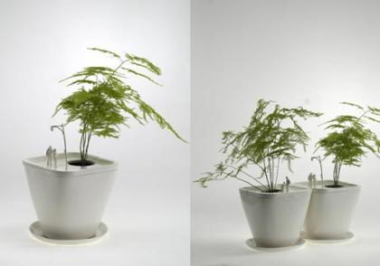 Parques en miniatura para tus plantas