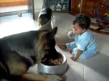 La increíble lucha por la comida entre un animal y un humano
