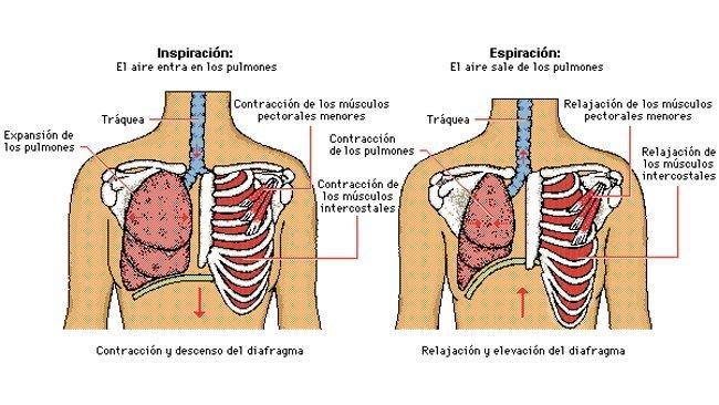 respiracion1