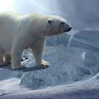 Fórmula para saber si una especie está condenada a la extinción