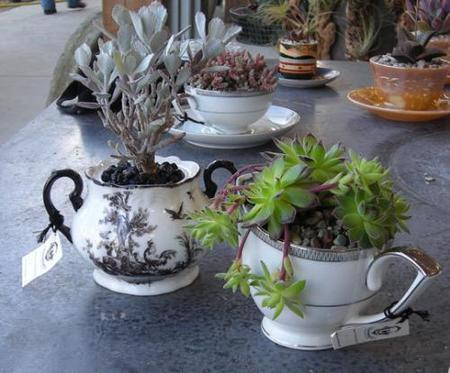 Plantas en tazas de té