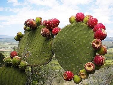 Estado de México 1a. parte. Alfeñiques, duraznos y tunas para espinarnos la mano.