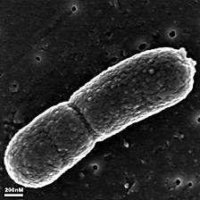 Microorganismos que reviven tras 100.000 años de hibernación