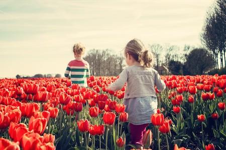 El contacto con la naturaleza es bueno para el aprendizaje: claves para que los niños dejen las pantallas y salgan al aire libre