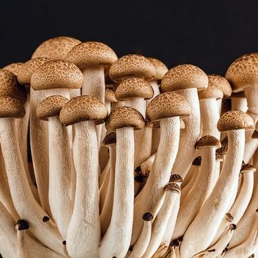 5 hongos mexicanos y cómo prepararlos para volverlos gloriosos en tu comida