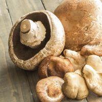 Cinco datos sobre las setas, alimentos de temporada que no puedes desaprovechar