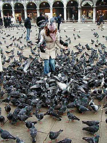 Guerra a las palomas de la Piazza San Marco