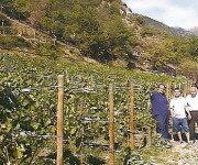 Vino del Principado de Andorra tras 100 años de vacío