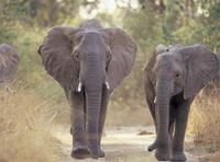 Los 10 mejores destinos para ver vida salvaje en Africa (IV)