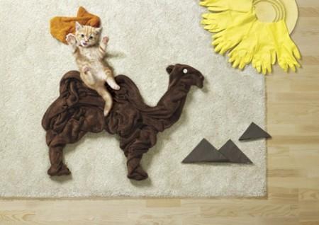 Divertidas fotografías de las mascotas más aventureras